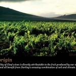 Darling vineyards