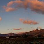 Vineyards Panoramic