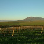 Kasteelsig Vineyards - Kasteelberg 0016