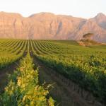 Kleine Zalze - Stellenbosch Mountain & Vineyards
