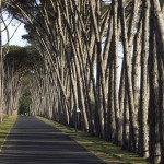The famous avenue of trees